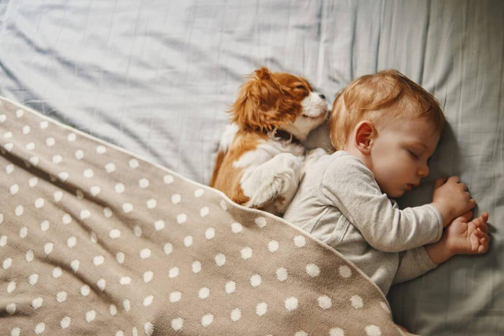 Hoeveel slaap hebben wij nodig als mens?