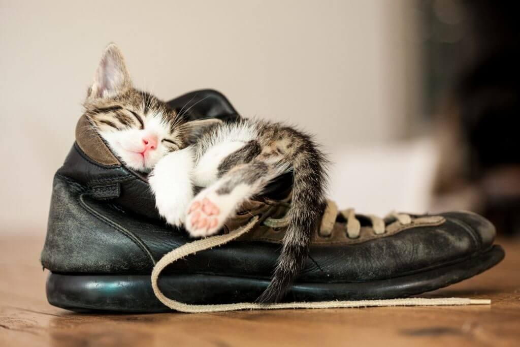 slaapproblemen bij dieren