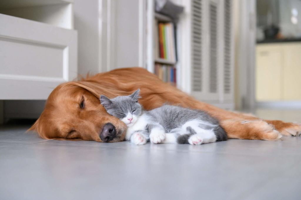 Zijslapers komen het vaakst voor en deze hond en kat slapen ook zo